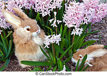 Hare In Hyacinths - Pair of rabbits in a spring garden.