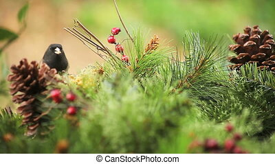 bird in a holiday setting - a dark-eyed junco feeds in a...