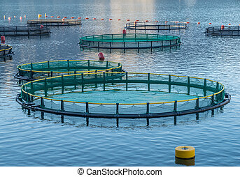 Cages for fish farming - Big Cages for fish farming in...