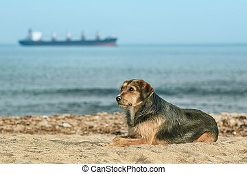 Stray Dog on the Shore of the Black Sea