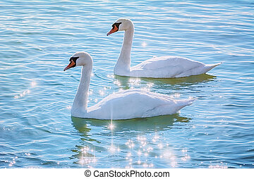 Swans on the Lake - Two Swans on the Lake