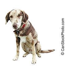 Sad face funny looking dog isolated white background - Sad...