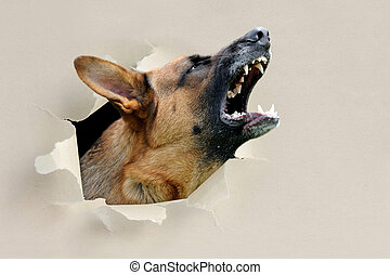 Dog looking through a hole torn the paper - Dog looking...