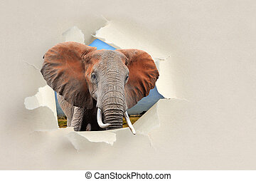 Elephant looking through a hole torn the paper - Elephant...