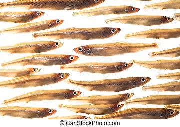 pequeño,  (smelts), pez,  4, arreglo