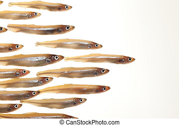 pequeño,  (smelts), pez,  3, arreglo