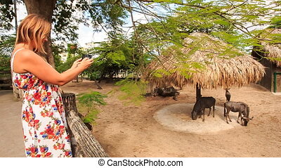 Blond Girl Takes Photos of Antelopes in Zoo Open Air Cage -...