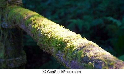 moss cover hiking trail wood rail - moss cover the hiking...