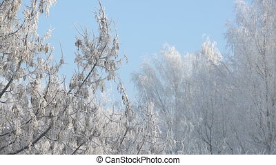 View of trees covered with frost in park