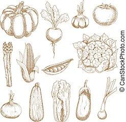 Farm vegetables sketches in vintage style - Ripe farm tomato...
