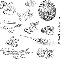 Nuts, beans, seeds and wheat sketches - Healthful nutritious...
