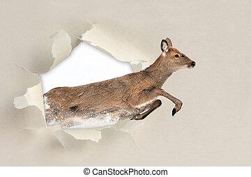 Deer running through a hole torn the paper - Deer running...