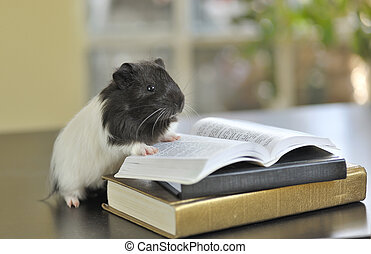 guinea pig reading books