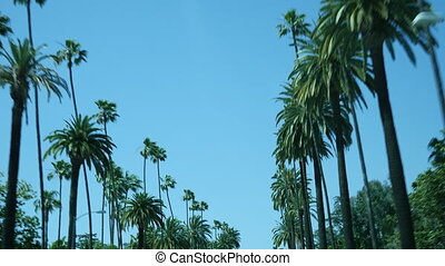 Palm trees drive - Driving through palm trees on a street...