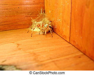 Spider and nest in wooden box