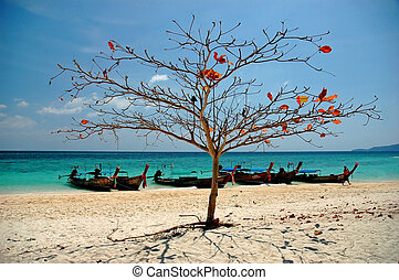 A Tropical beach with a tree and boats in Bamboo Island in...