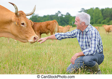 Herdsman with cow