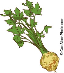 white background vector illustration of a healthy vegetable...