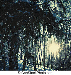 Bright sunny day in the winter forest, natural backgrounds