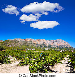 Xabia Javea Montgo vineyards in Alicante Spain