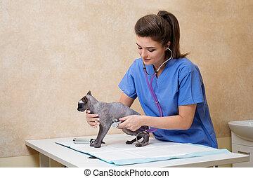 Veterinarian examining cat in veterinary clinic