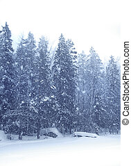 Snow falling forest - Snow falling heavily with winter...