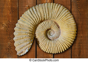 Ammonites fossil in Valencian Community Spain