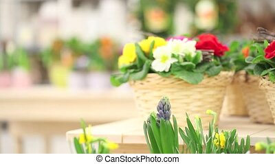 spring concept, woman florist with flowers basket and...