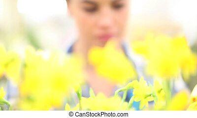 spring concept, woman in garden takes care of flowers...