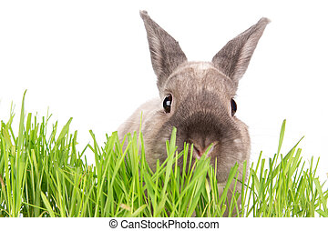 Funny little rabbit. Easter background. Close-up.