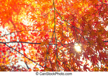 Beautiful Colorful Autumn Leaves ( Filtered image processed...