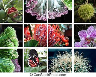 Nature Collage - Compositions of nature with different...