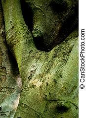 Hugging beech trees