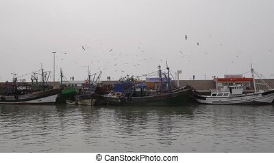 fisherman boats with flying gulls essaouira, morocco