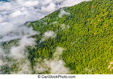 Mountain forest in sky - Cloudy weather view of the highest...