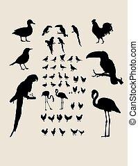 Bird Silhouettes Collection, art vector design