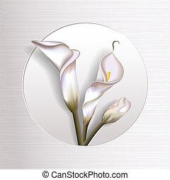 Callas In Frame - Elegant blooming calla flowers in simple...