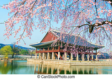 Gyeongbokgung Palace with cherry blossom in spring,Korea.