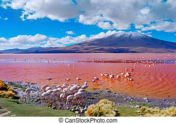 Flamingoes in Laguna Colorada , Bolivia - Flamingoes in...