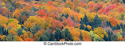 Fall Foliage background - Colorful foliage abstract...