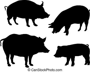 Pigs - Abstract vector illustration of various pigs...