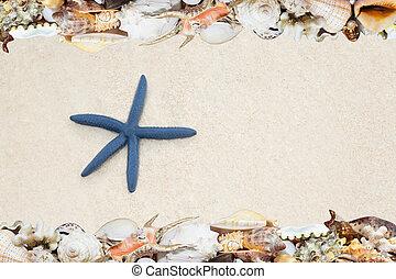 tropicais, conchas, ans, starfish, ligado, Um, praia,