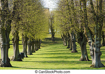 Alley of trees in Frederiksberg Park, Copenhagen - Alley of...