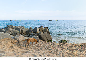 Spanish dog at the beach - Spanish street dog at the beach