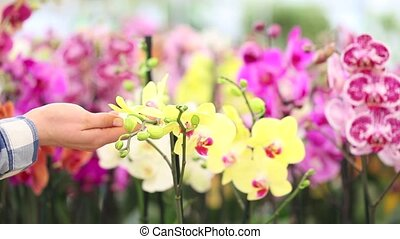 woman walking in the garden of flowers, touches orchids