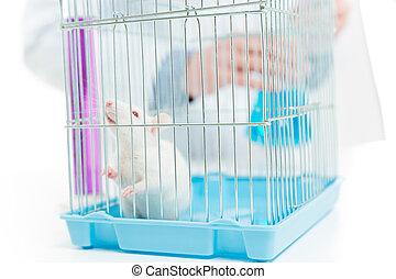 Rat in chemist laboratory