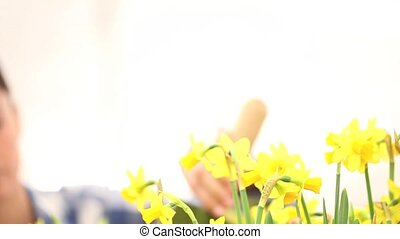 springtime, woman  in garden takes care of flowers narcissus
