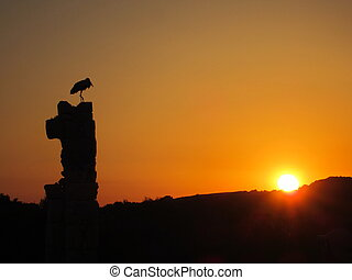 Stork - Silhouette of stork at sunset