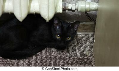 Black Cat Eats a Meal
