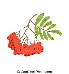 Branch of red rowan cartoon icon